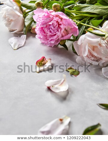 Composition from petals and branches of pink and white peonies with green leaves on a gray concrete  Stock photo © artjazz