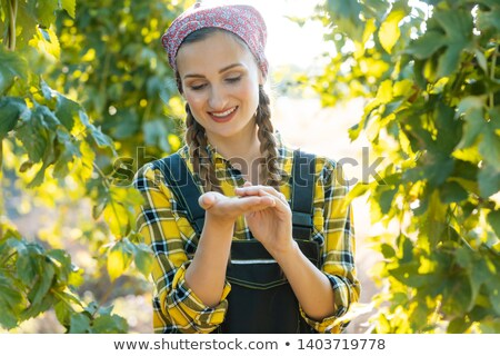 Hands of farmer woman holding hop umbels for testing Stock photo © Kzenon