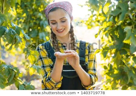 hop · veld · groeiend · hemel · patroon · landbouw - stockfoto © kzenon