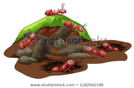 Csoport hangyák élet földalatti illusztráció fű Stock fotó © colematt