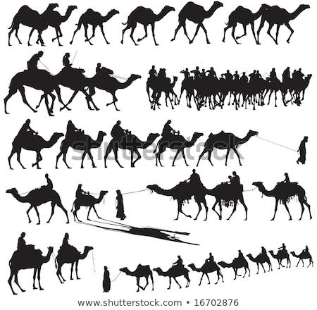 Camelo silhuetas conjunto padrão eps 10 Foto stock © netkov1