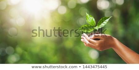 Handen groene plant natuur zorg menselijke Stockfoto © cienpies
