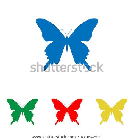 zöld · kék · rajz · pillangó · izolált · fehér - stock fotó © colematt