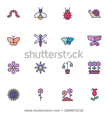 Insects icons set Stock photo © netkov1