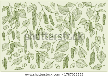 Betulla albero foglie bianco legno poco profondo Foto d'archivio © AGfoto