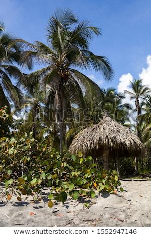 Caraibi · spiaggia · Colombia · tropicali · parco · foresta - foto d'archivio © boggy