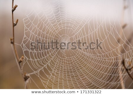 web spider and water droplets in the wild stock photo © justinb