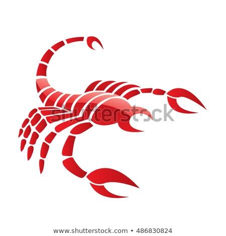 赤 サソリ 孤立した 白 水 ストックフォト © cidepix