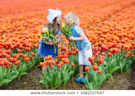 boy on field of tulips stock photo © paha_l