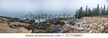 foggy coast of maine stock photo © elenaphoto