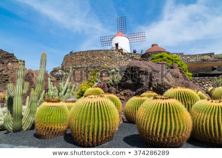 Old Windmill on Lanzarote stock photo © franky242