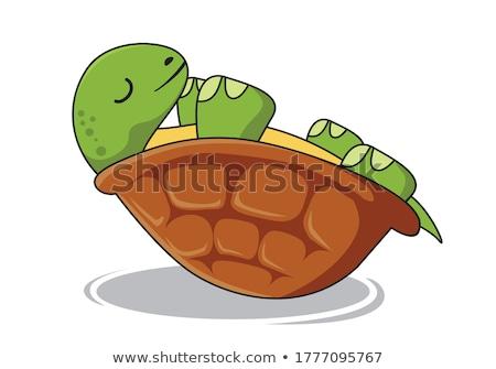 Ters kaplumbağa beyaz su geri kabuk Stok fotoğraf © FOKA