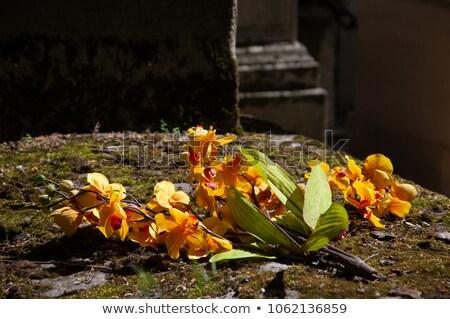 кладбище · могилы · статуя · место - Сток-фото © haraldmuc