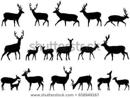 Stockfoto: Deer Silhouette