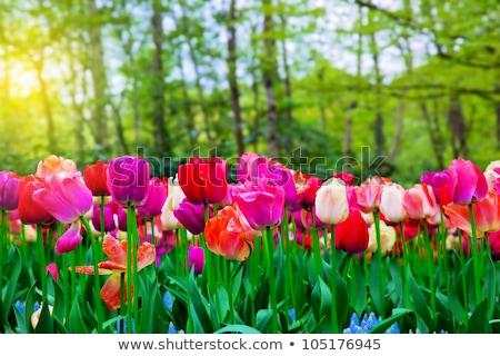 flores · grande · primavera · flores · amarelas · árvore - foto stock © dacasdo