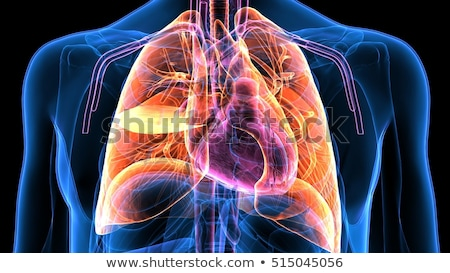 Human Cardiovascular System Stock photo © Lightsource