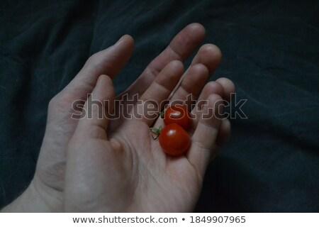 cerise · main · fruits · ferme - photo stock © tangducminh
