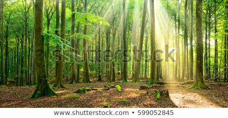 Orman yaz altında zemin ağaç Stok fotoğraf © Arrxxx