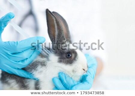 ストックフォト: 獣医 · ウサギ · 白 · バニー · 座って · 表