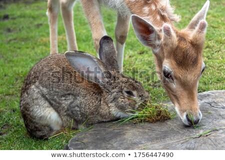 Geyik tavşan dokunmak şık çiçekler büyüyen Stok fotoğraf © Soleil