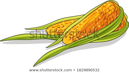 Corn Maize Cobs and Recipe Book Stock photo © stevanovicigor