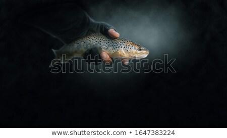 Halászat csalétek közelkép doboz sekély víz Stock fotó © arenacreative