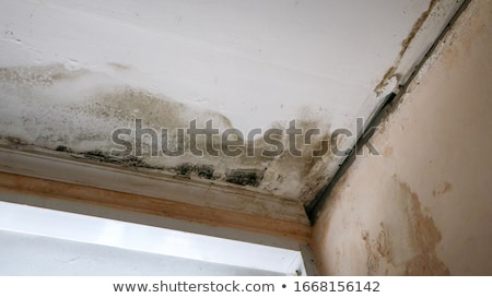 Water leaking damaged home Stock photo © devon