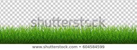 vector illustration green summer field with flowers and grass stock photo © mcherevan
