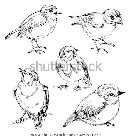 Oiseaux dessinés à la main noir battant croquis Photo stock © retrostar