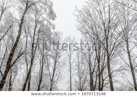 alan · ağaçlar · kar · mavi · mavi · gökyüzü · gökyüzü - stok fotoğraf © mady70