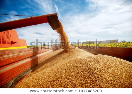 close up photo of combine harvester harvesting wheat stock photo © maxpro