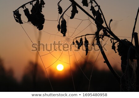 Birch with spiderwebs and morning dew Stock photo © Mps197