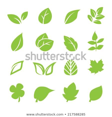 Idea verde vector icono diseno luz Foto stock © rizwanali3d
