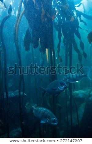 魚 スイミング タンク 自然 海 青 ストックフォト © wavebreak_media