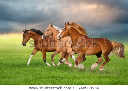 Stock photo: horses running on field