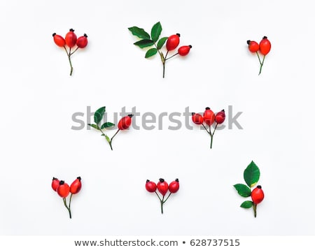 Dog rose hips isolated on white Stock photo © tetkoren
