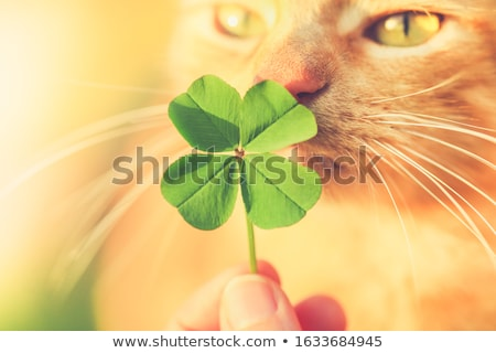 Saint Patricks Day Cat Stock photo © Lightsource