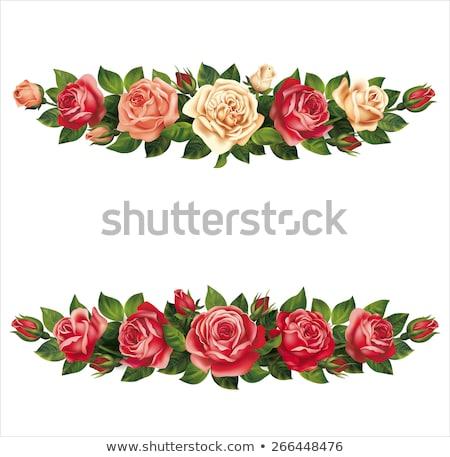 Rosas grinalda isolado branco eps 10 Foto stock © beholdereye