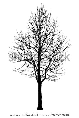 vetor · nu · velho · secar · dead · tree · silhueta - foto stock © rastudio
