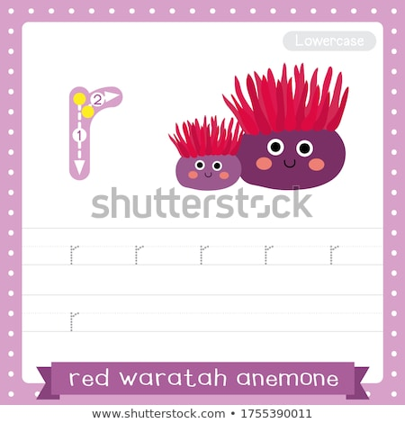Flashcard letter R is for red Stock photo © bluering