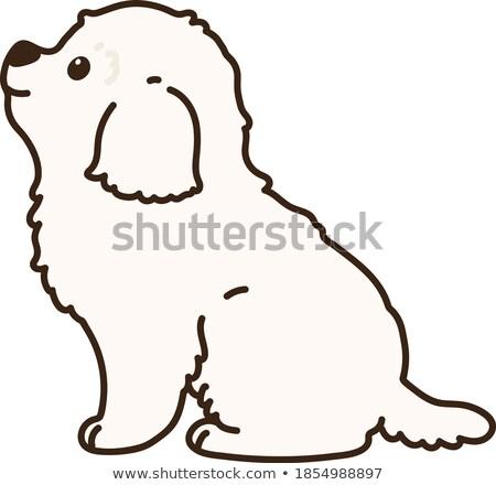 puppy · geïsoleerd · witte · zijaanzicht · achtergrond · trein - stockfoto © feedough