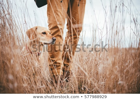 Man Hunting With Dog Stock photo © gregorydean