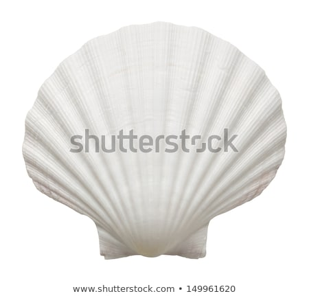 seashell, isolated on white background, close-up Stock photo © TanaCh