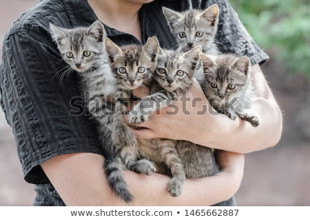 Family adopting cat from animal shelter Stock photo © Kzenon