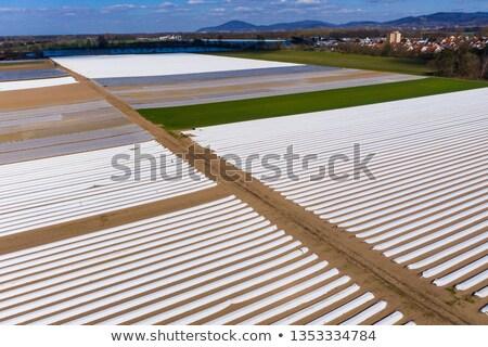 campo · agricola · materiale · serra · bugie · business - foto d'archivio © lightfieldstudios