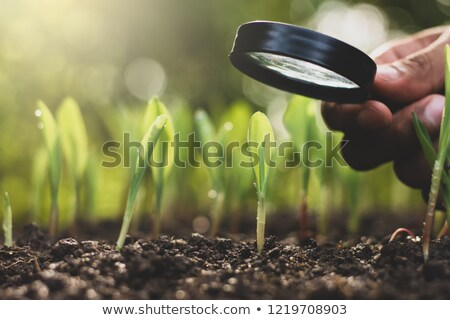 Homem campo vidro floresta árvore seis Foto stock © IS2
