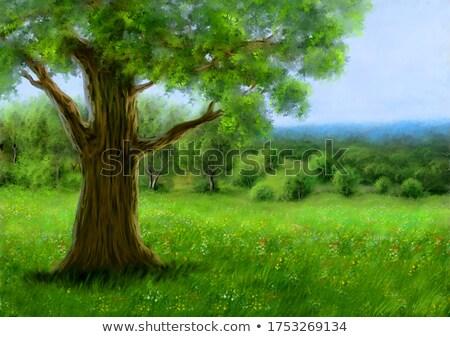 Stockfoto: Najaar · landschap · platteland · berg · weide · ochtend