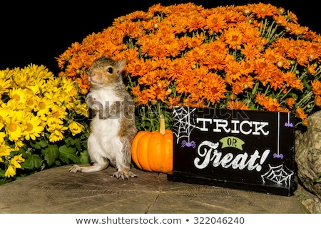 Halloween Squirrel Sign Stock photo © Lightsource