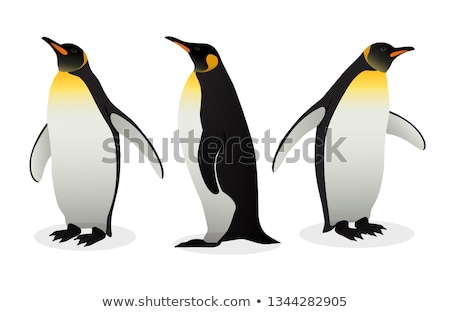 Flock Of Emperor Penguins on white background Stock photo © MarySan