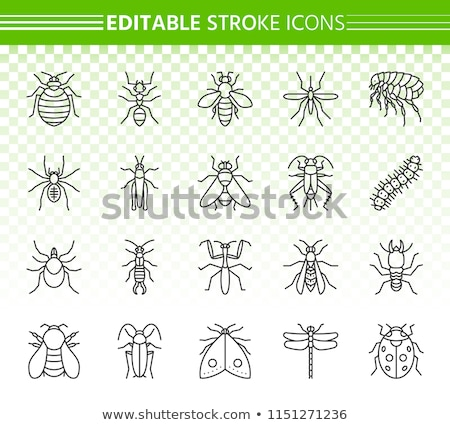 Insect Line Icons Set Stock photo © Voysla